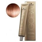 Igora Royal Absolutes 6-70 Blond Foncé Cuivré Naturel 60 ML